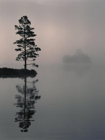https://imgc.artprintimages.com/img/print/lone-scots-pine-in-mist-on-edge-of-lake-strathspey-highland-scotland-uk_u-l-q10nyt60.jpg?p=0
