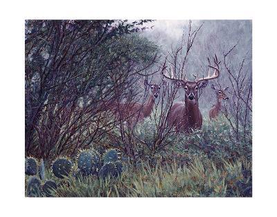 Lone Star Whitetail-John Banovich-Art Print