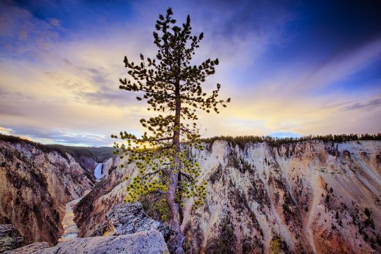5744196fda94d Lone Tree at Grand Canyon of the Yellowstone