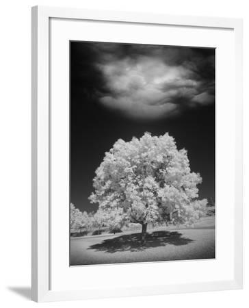 Lone Tree & Cloud, Green Bay, Wisconsin '12-Monte Nagler-Framed Photographic Print