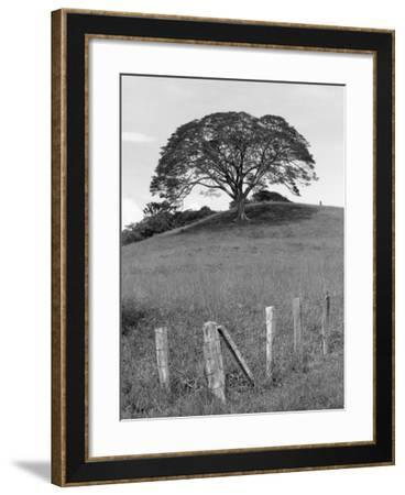 Lone Tree & Fence, Costa-Monte Nagler-Framed Photographic Print