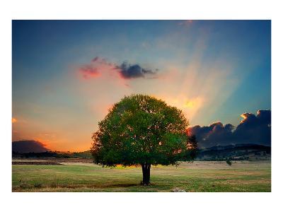 Lone Tree in Cloud Sunset--Art Print