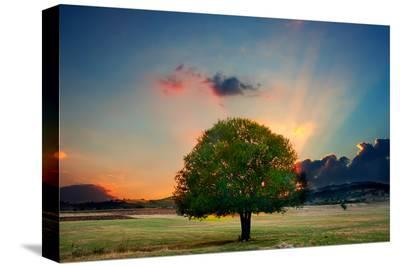 Lone Tree in Cloud Sunset--Stretched Canvas Print