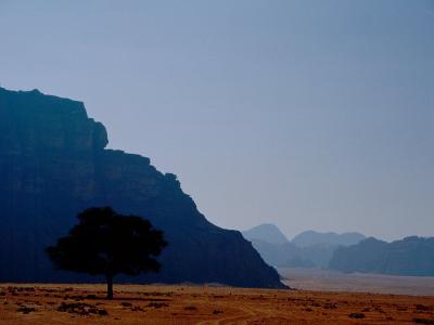 Lone Tree in Desolate Red Desert of Wadi Rum, Jordan-Cindy Miller Hopkins-Photographic Print