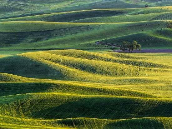 Lone tree in fields of wheat, peas and barley-Terry Eggers-Photographic Print