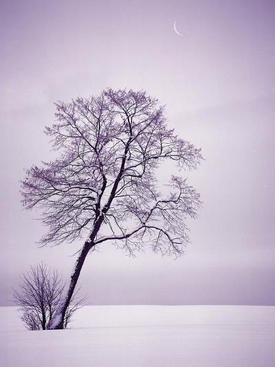Lone Tree in Snow-Jim Zuckerman-Photographic Print
