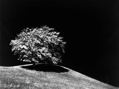 Lone Tree in Sunlight--Photographic Print
