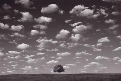Lone Tree Morning In BW-Steve Gadomski-Photographic Print
