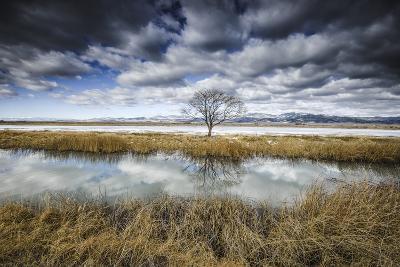 Lone Tree Reflected in Water Near Del Norte, Colorado-Keith Ladzinski-Photographic Print