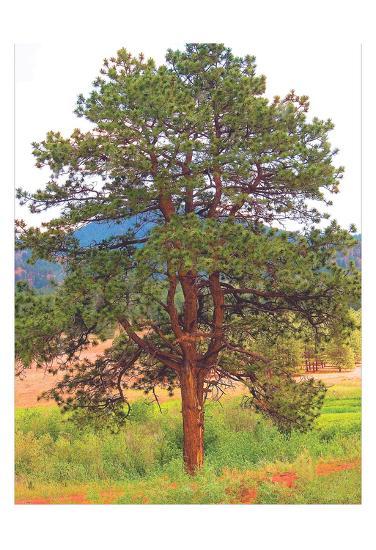 Lone Tree-Joseph Charity-Art Print