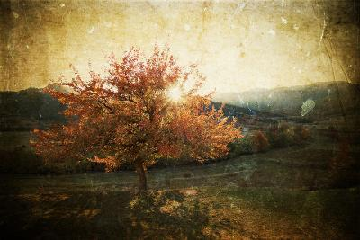 Lonely Beautiful Autumn Tree - Vintage Photo-melis-Photographic Print