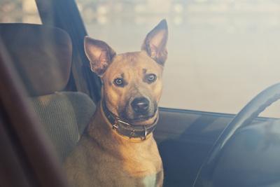 https://imgc.artprintimages.com/img/print/lonely-dog-waiting-in-the-car_u-l-q1a2rnf0.jpg?p=0
