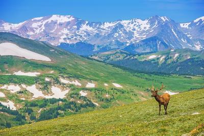 Lonely Elk Alpine Meadow-duallogic-Photographic Print