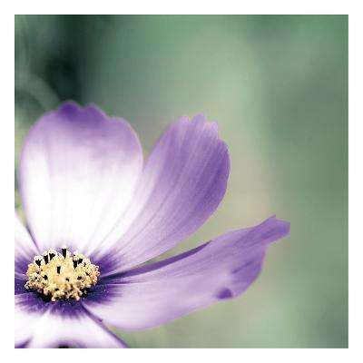Lonely Lilac 1-Tracey Telik-Art Print