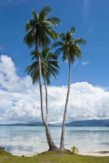 Lonely Palm Tree in the Marovo Lagoon, Solomon Islands, Pacific-Michael Runkel-Photographic Print
