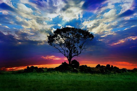 lonely-tree-and-sunset