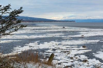 Lonely Tree Overlooking Frozen Tidal Flats-Latitude 59 LLP-Photographic Print
