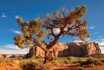 Lonely Tree Still a Life in Monument Valley, Utah-lucky-photographer-Photographic Print