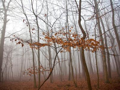 Lonely Tree-Maja Hrnjak-Art Print