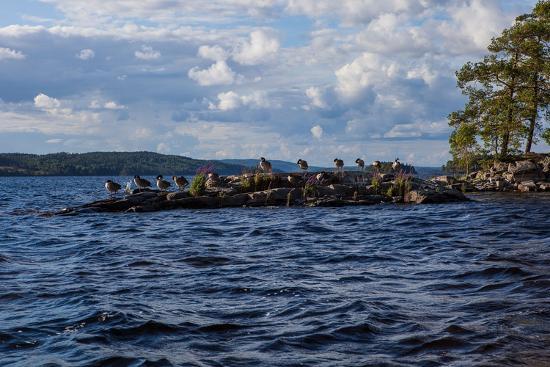 Lonesome landscape on Stora Le Lake, Sweden-Andrea Lang-Photographic Print