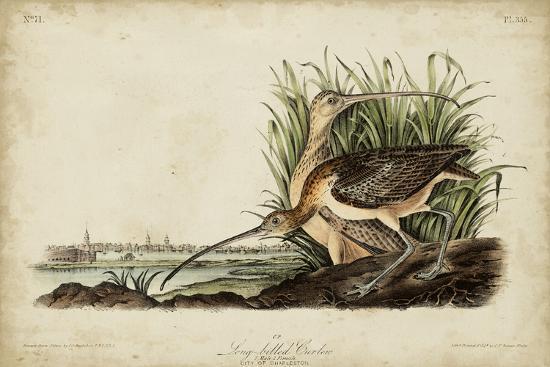 Long-billed Curlew-John James Audubon-Art Print