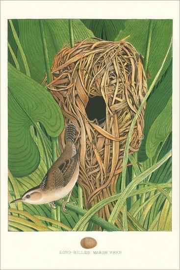Long-Billed Marsh Wren--Art Print