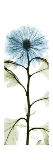 Long Blue Chrysanthemum-Albert Koetsier-Art Print