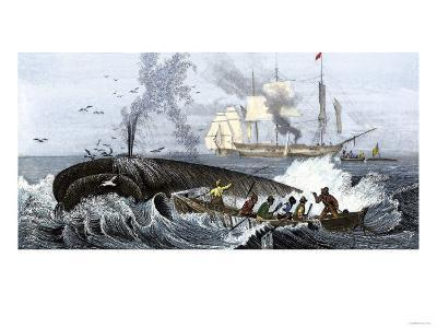 Long Boat Crew Harpooning a Whale--Giclee Print