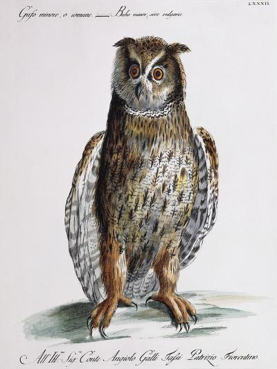Long-Eared Owl (Bubo Minor Sive Vulgaris)--Giclee Print