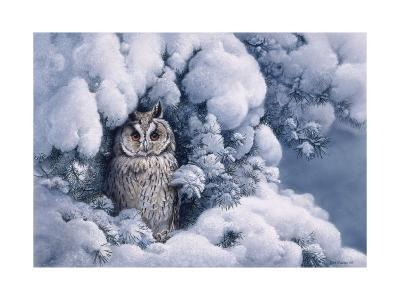 Long-Eared Owl-Harro Maass-Giclee Print
