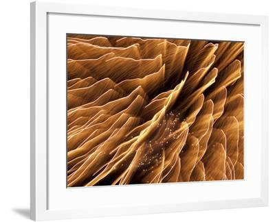 Long Exposure of Fireworks on the Fourth of July-Michael Melford-Framed Photographic Print