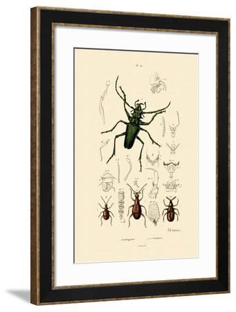 Long-Horned Beetle, 1833-39--Framed Giclee Print