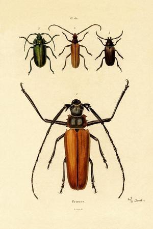 https://imgc.artprintimages.com/img/print/long-horned-beetles-1833-39_u-l-pvd4tn0.jpg?p=0