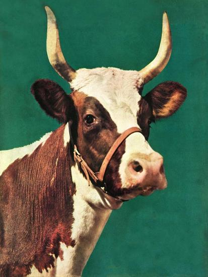 """Long-Horned Cow,""February 1, 1945-F^P^ Sherry-Giclee Print"