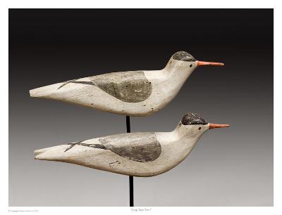 Long Island Terns-Robert Shaw-Art Print