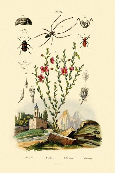 Long-Jawed Spider, 1833-39--Giclee Print