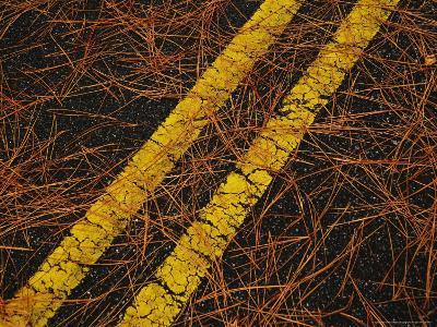 Long Leaf Pine Needles Littering a Park Road-Raymond Gehman-Photographic Print