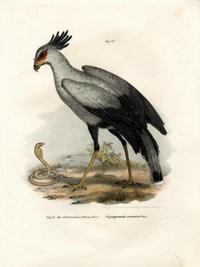 Long-Legged Raptorial Bird, 1864--Giclee Print