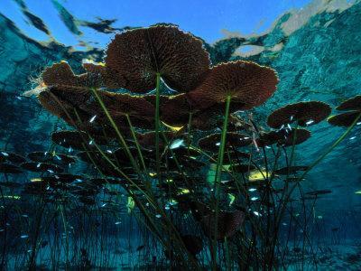 https://imgc.artprintimages.com/img/print/long-stemmed-water-lilies-reach-for-the-hot-mexican-sun_u-l-p3jlf70.jpg?p=0