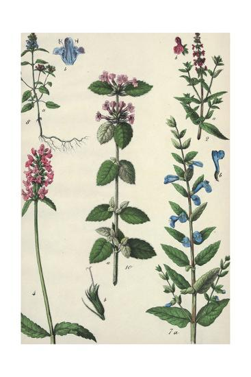 Long Stems of Flowering Plants with Small Blossoms--Art Print