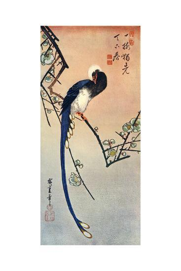 Long Tailed Blue Bird on Branch of Plum Tree in Blossom, 19th Century-Ando Hiroshige-Giclee Print