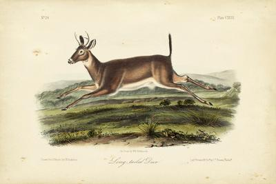 https://imgc.artprintimages.com/img/print/long-tailed-deer_u-l-q1bh7ta0.jpg?artPerspective=n