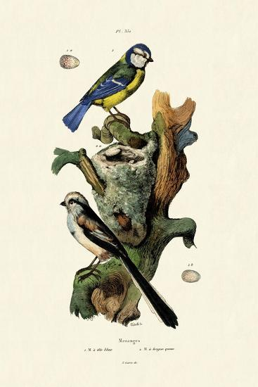 Long-Tailed Tit, 1833-39--Giclee Print