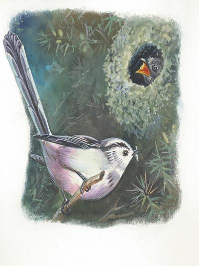 Long-Tailed Tit Aegithalos Caudatus Bringing Food to Young in Nest--Giclee Print