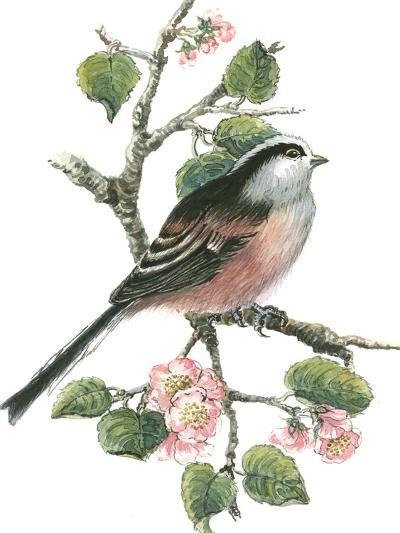 Long Tailed Tit and Cherry Blossom-Nell Hill-Giclee Print
