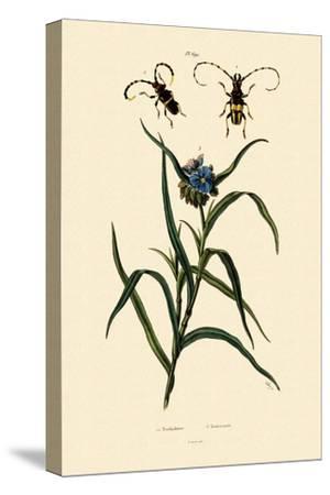 Longhorn Beetles, 1833-39