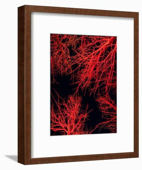 Longwood Gardens, in Pennsylvania, Showcases its Annual Holiday Lights-Eric Kruszewski-Framed Photographic Print