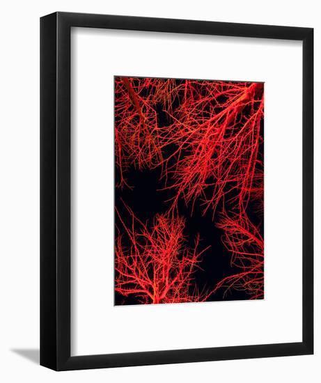 Longwood Gardens, in Pennsylvania, Showcases its Annual Holiday Lights-Eric Kruszewski-Framed Photographic Print