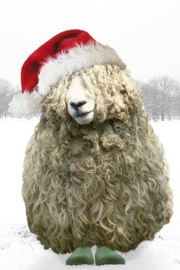 Longwool Sheep Wellington Boots Wearing Christmas Hat--Photographic Print