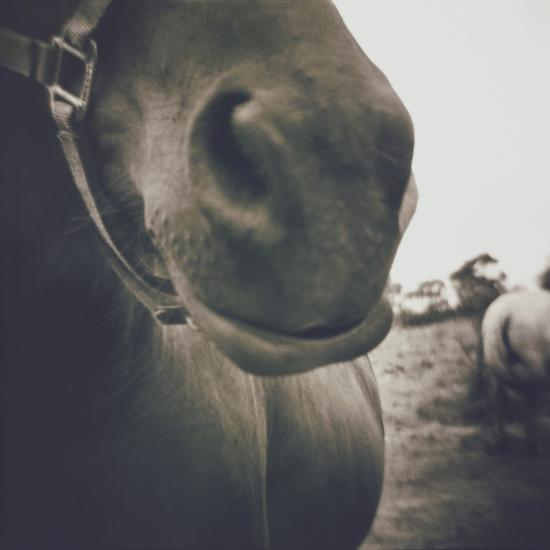 Looking a Gift Horse in the Mouth-Theo Westenberger-Photographic Print